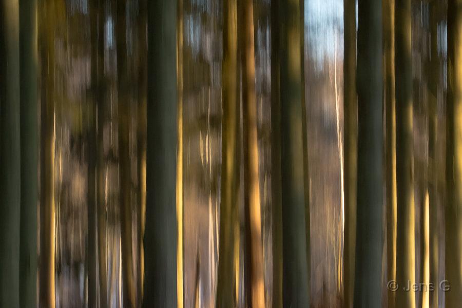 Træstammer