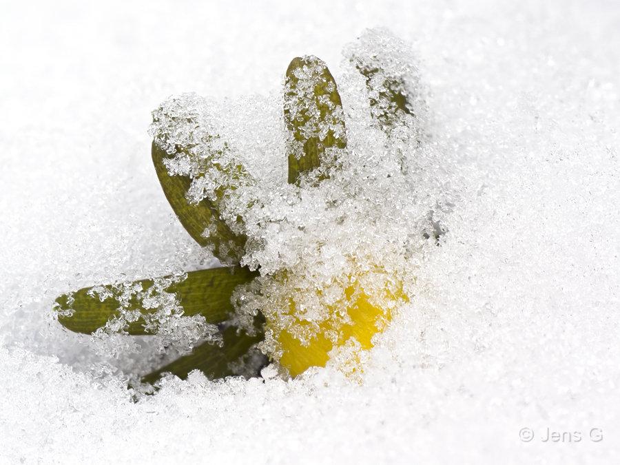 Erantis der titter op af sneen