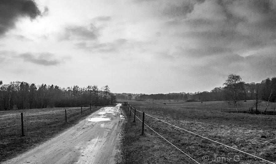 Grusvej og hestefolde i sort/hvid