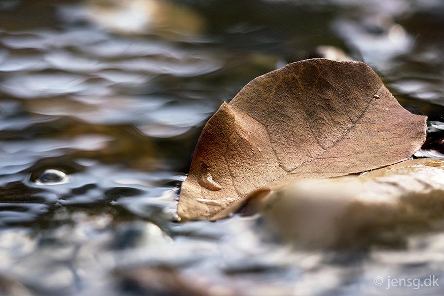 Vissent blad i vandløb