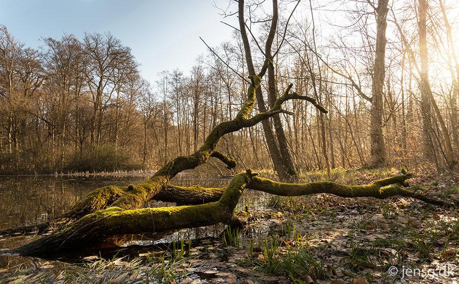 Væltet træ