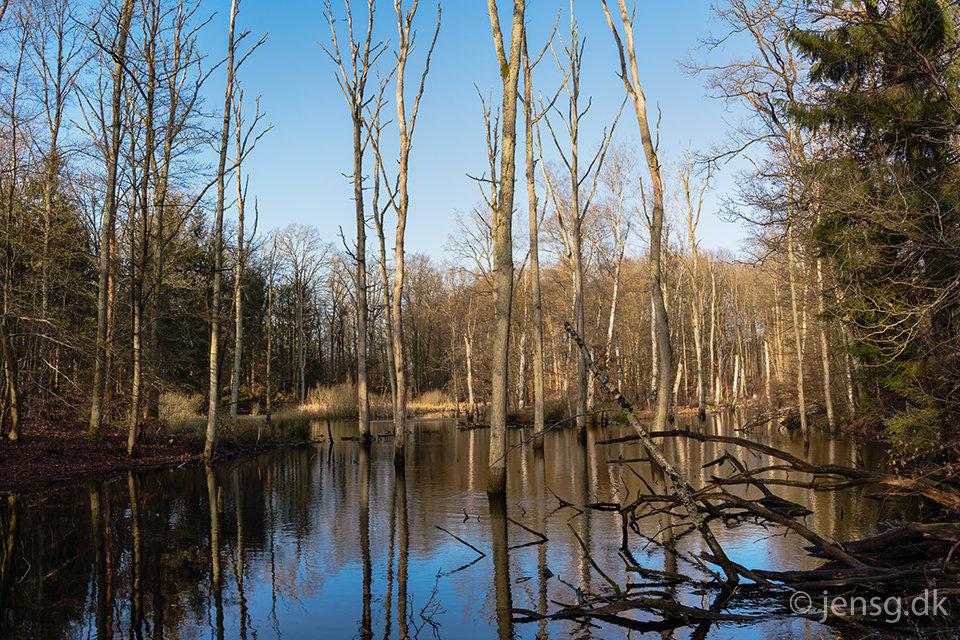 Oversvømmet skov