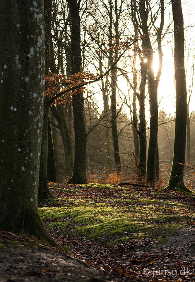 Efterårsskov i modlys